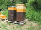 Die Bienen sind da