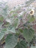 Gartenimpressionen 2014